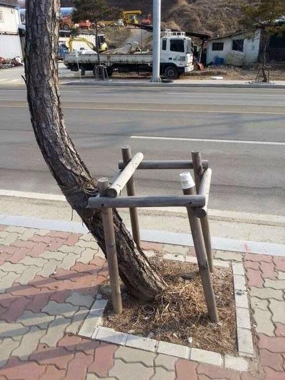 arbre-tuteur-support-trottoir-courbe